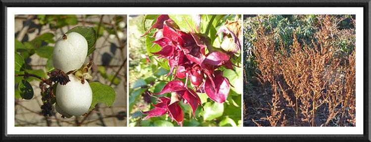 november colour in garden