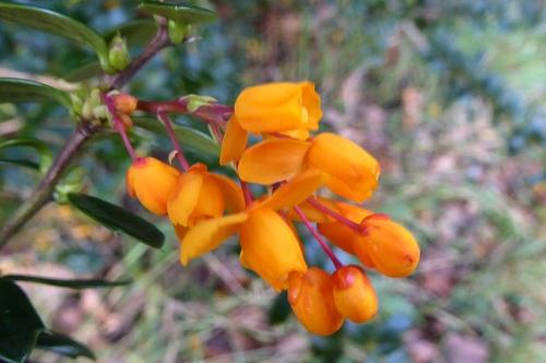 november flowers kirk wynd