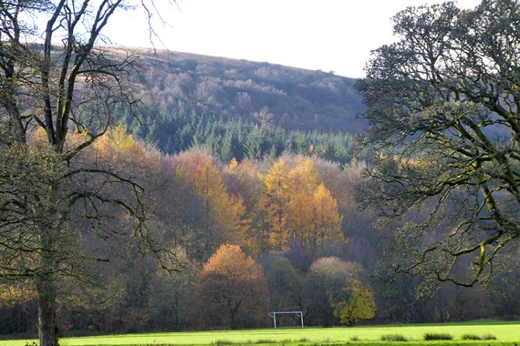 November tree colour 1
