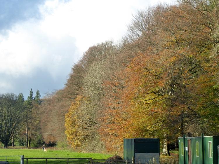 November tree colour 2