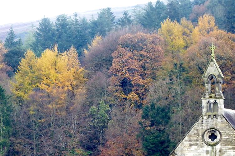 November tree colour 3`