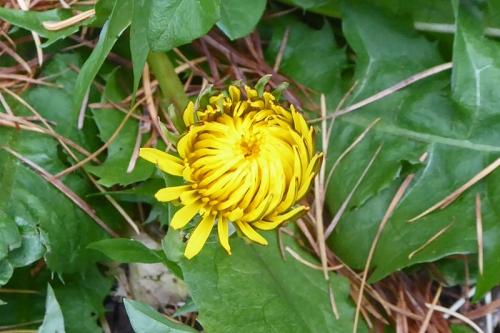 november wild flower