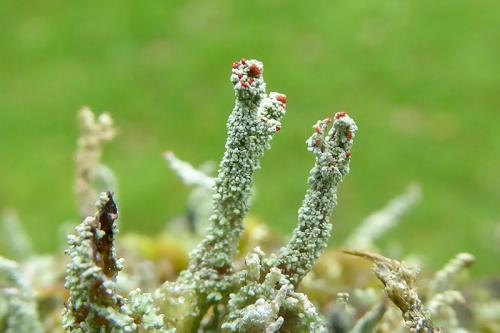 park wall lichen