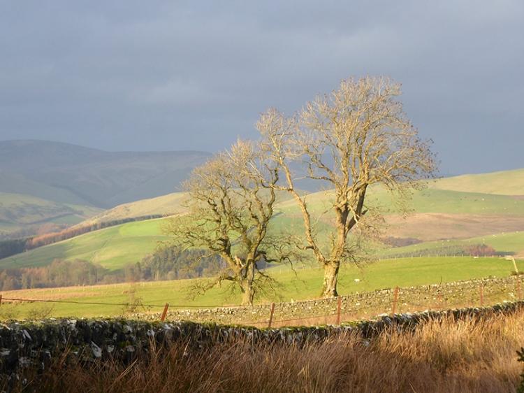 two trees abive Hillhead
