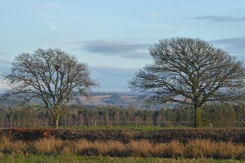 two trees november