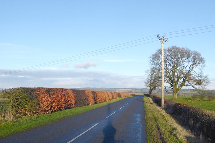 View of Glenzier road