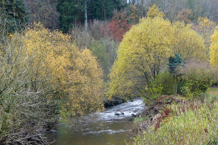Wauchope Water from park brig