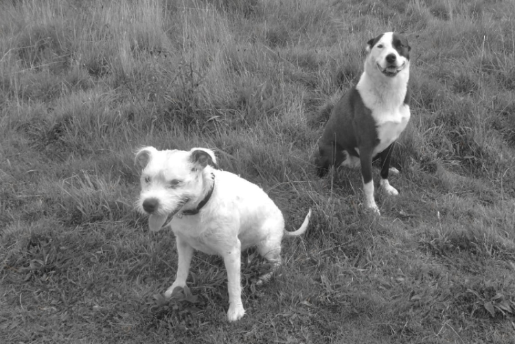 wemyss dogs