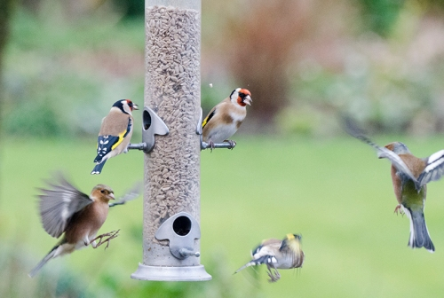 whirlwind at the feeder