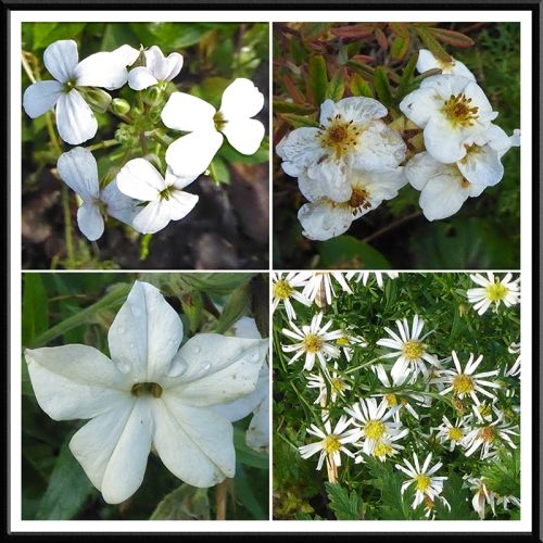 white flowers november