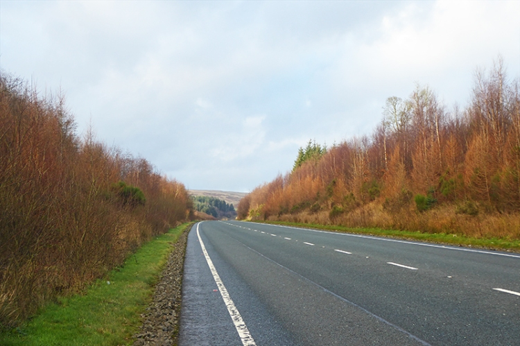 A7 with larches