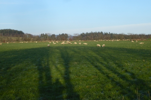 Gilnokcie field