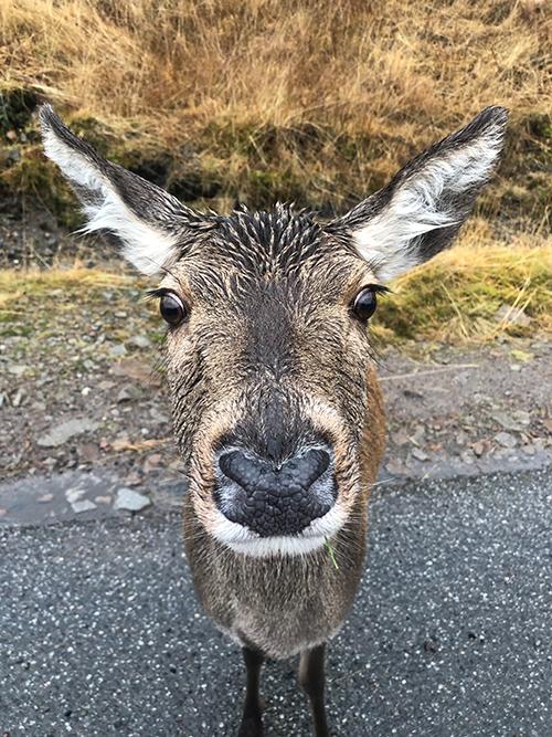 Joe's deer