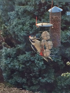 Sandra's woodpecker