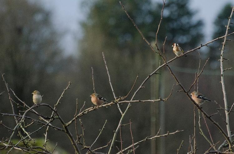 a snatch of sun on the plum tree