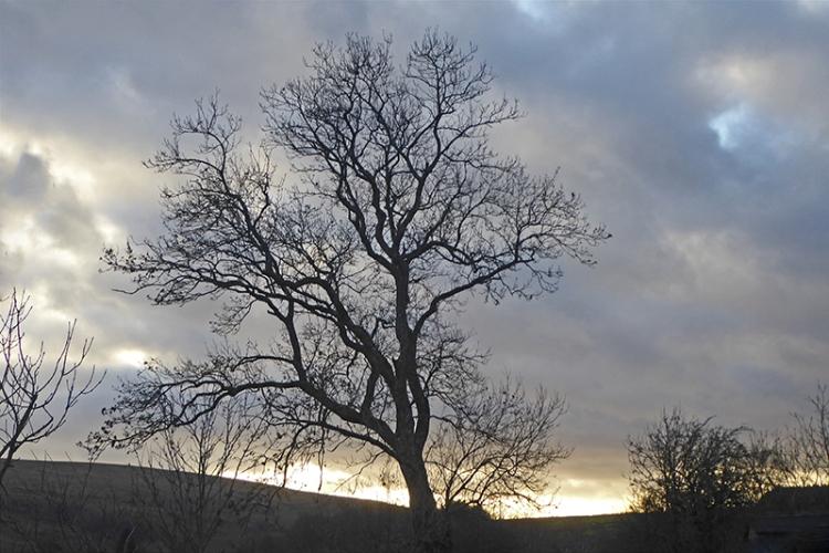becks tarck tree