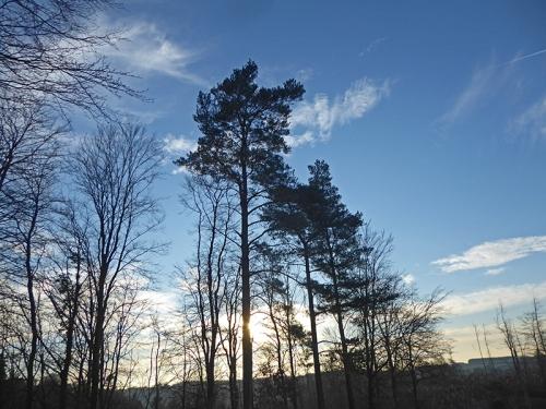 byreburn woods (2)