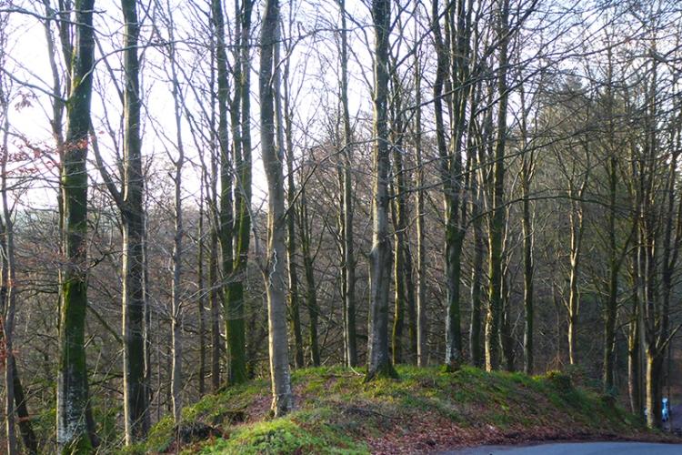 byreburn woods