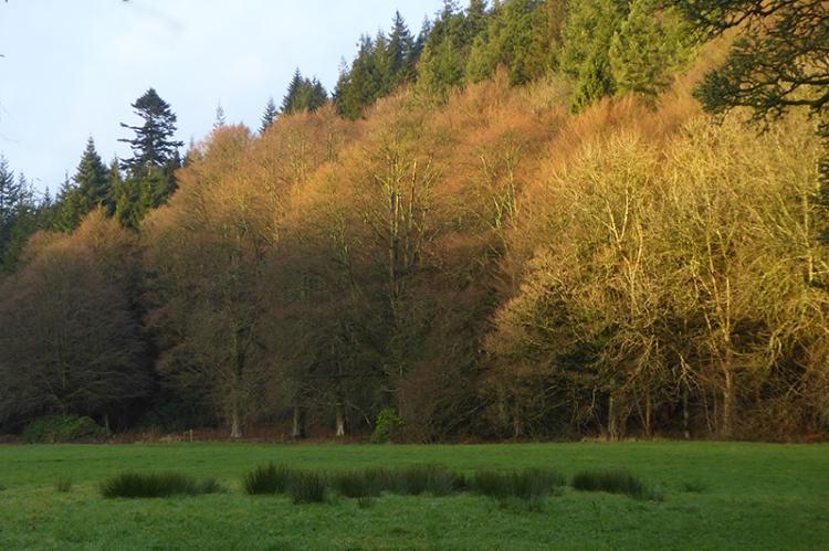 castleholm trees catch late sun