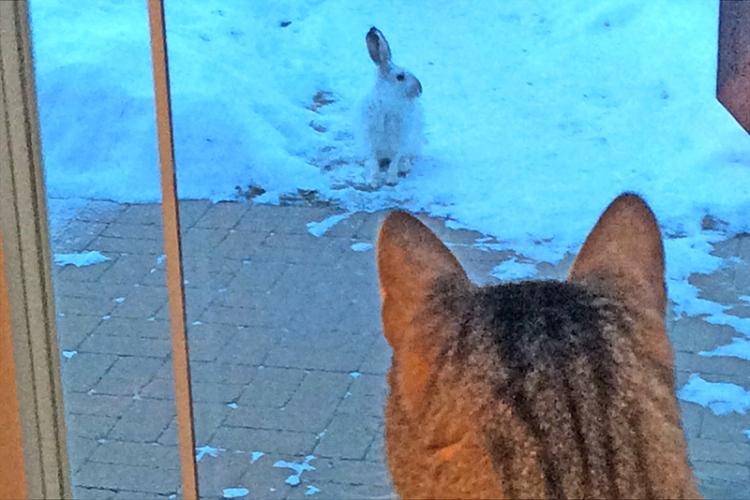 cat and rabbit Manitoba
