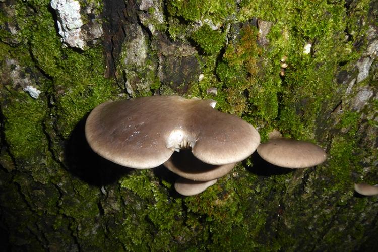 co-op fungus low