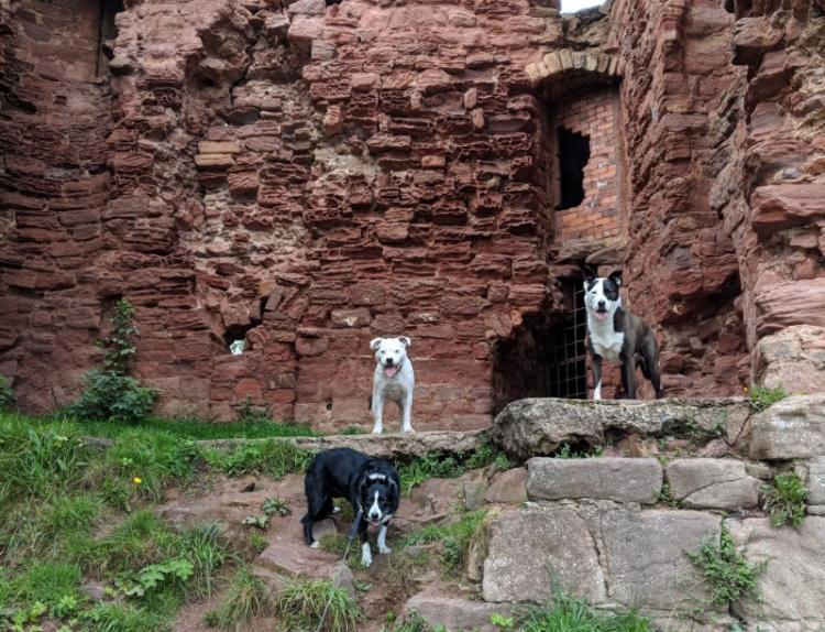 dogs at wemyss castle
