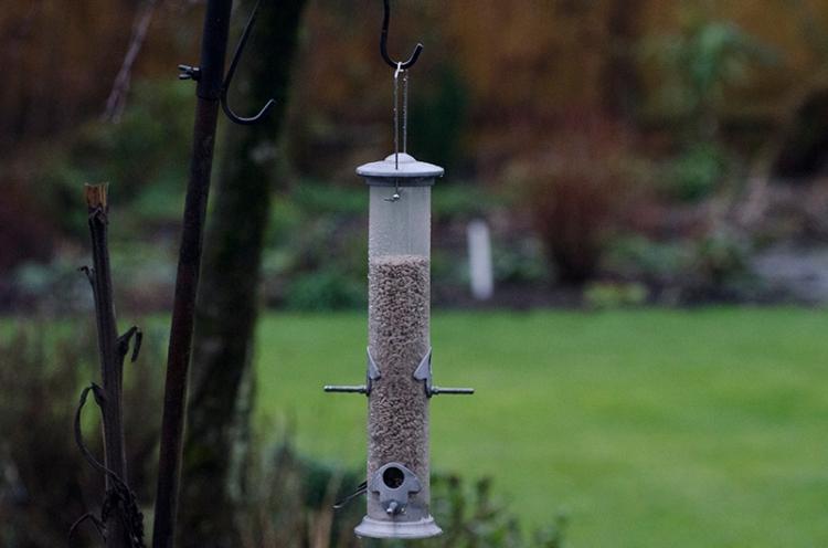 fairly full feeder