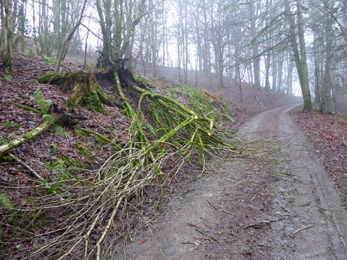 fallen tree on Stubholm track