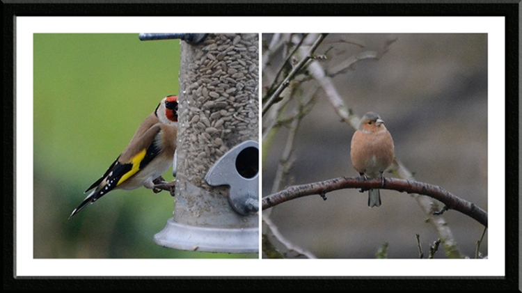 first birds