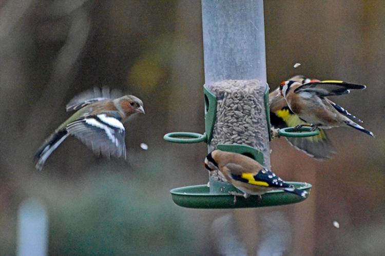 flying bird seed