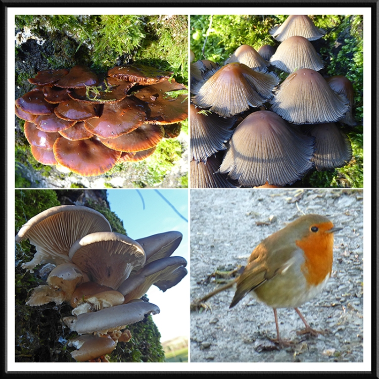 fungus and robin stubholm track