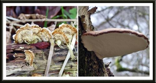 fungus in woods