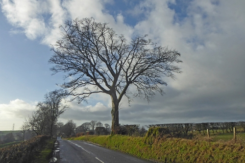 gair road tree