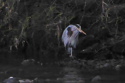 heron in shadows
