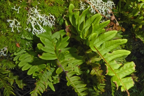 irvine house moss lichen fern
