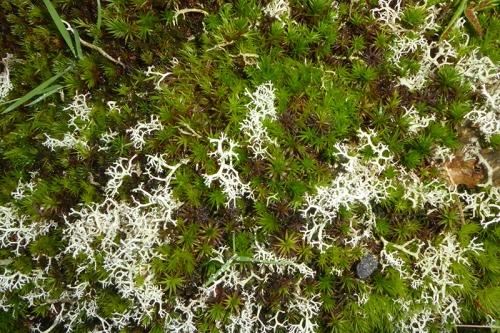 irvine house moss lichen