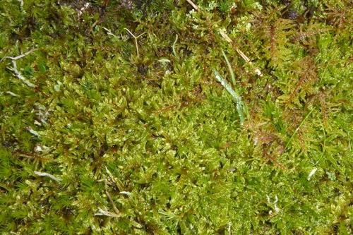 irvine house moss