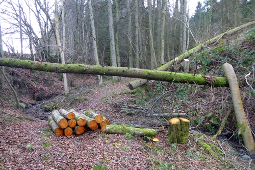 kernigal wood tidying