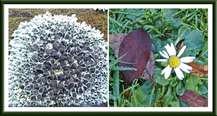 lichen adn saisy