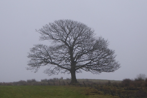 misty tree at bloch