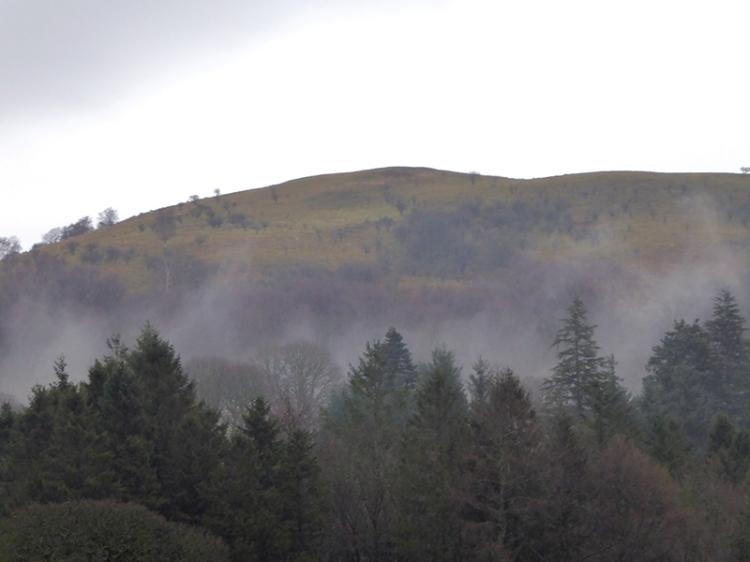 misty trees castleholm