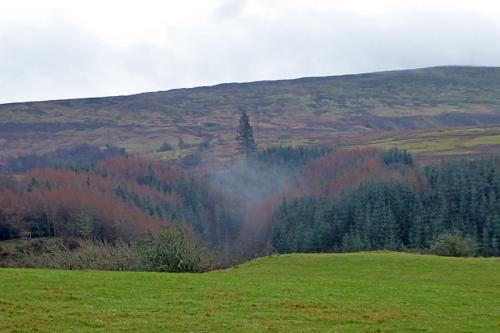 misty valley terrona