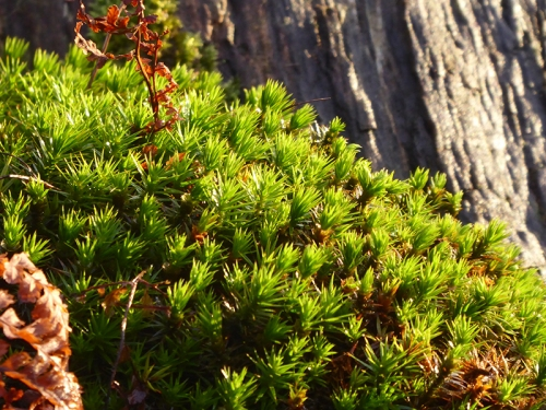 moss on lodge walks