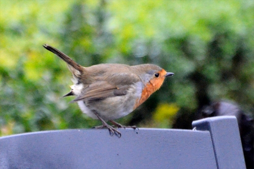 robin on back of seat
