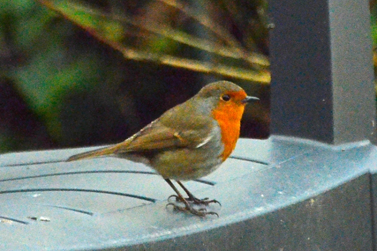 robin on chair