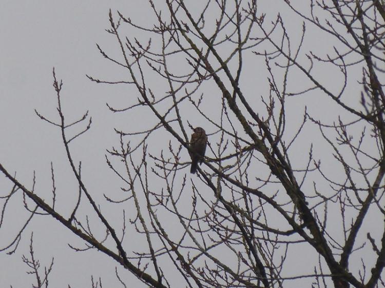 singing bird in tree