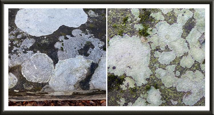 skippers brodge lichen