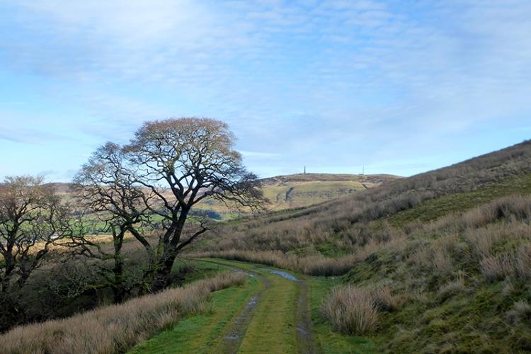 track down warbla with tree