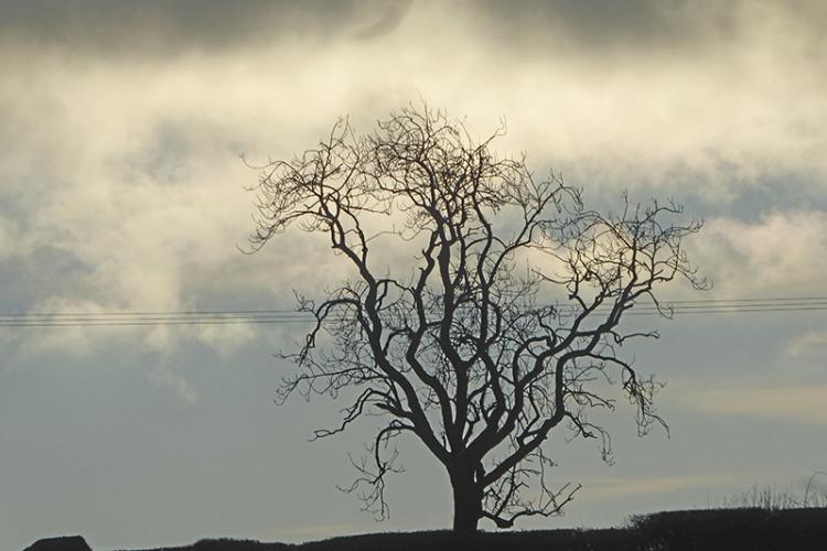 tree at Giar road