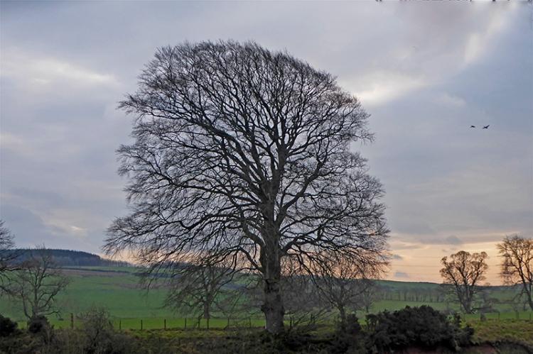 tree between the waters